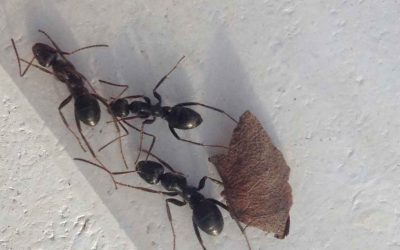 The best way to get rid of ants forever